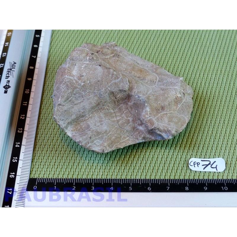 Corail fossilisé une face polie de 180g .