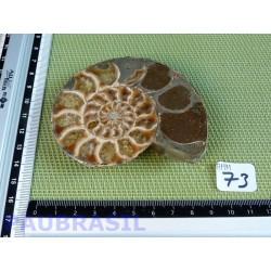Ammonite une face Polie Q Extra 144g