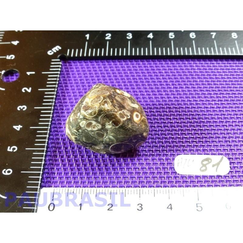 Agate Turitelle - Turritellas Jaspis 21gr