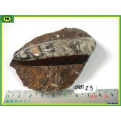 Orthoceras Poli du Maroc 159g