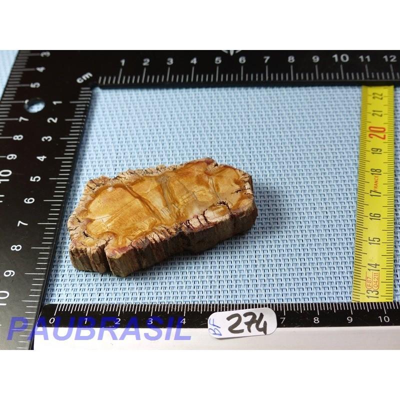 Bois fossilisé en tranche polie Q Extra 50gr Madagascar