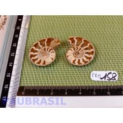 Paire d Ammonite Polie 7g